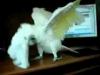 Jak tančí papoušek na metal? :D #Video